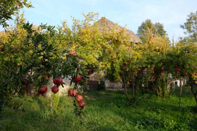 pomegranate melange.bg